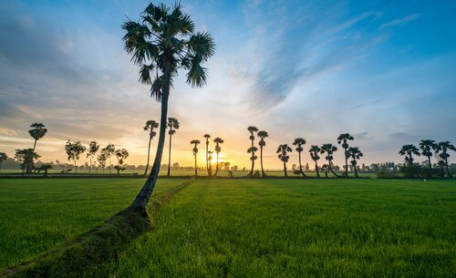 How to go to An Giang Province from Ho Chi Minh City